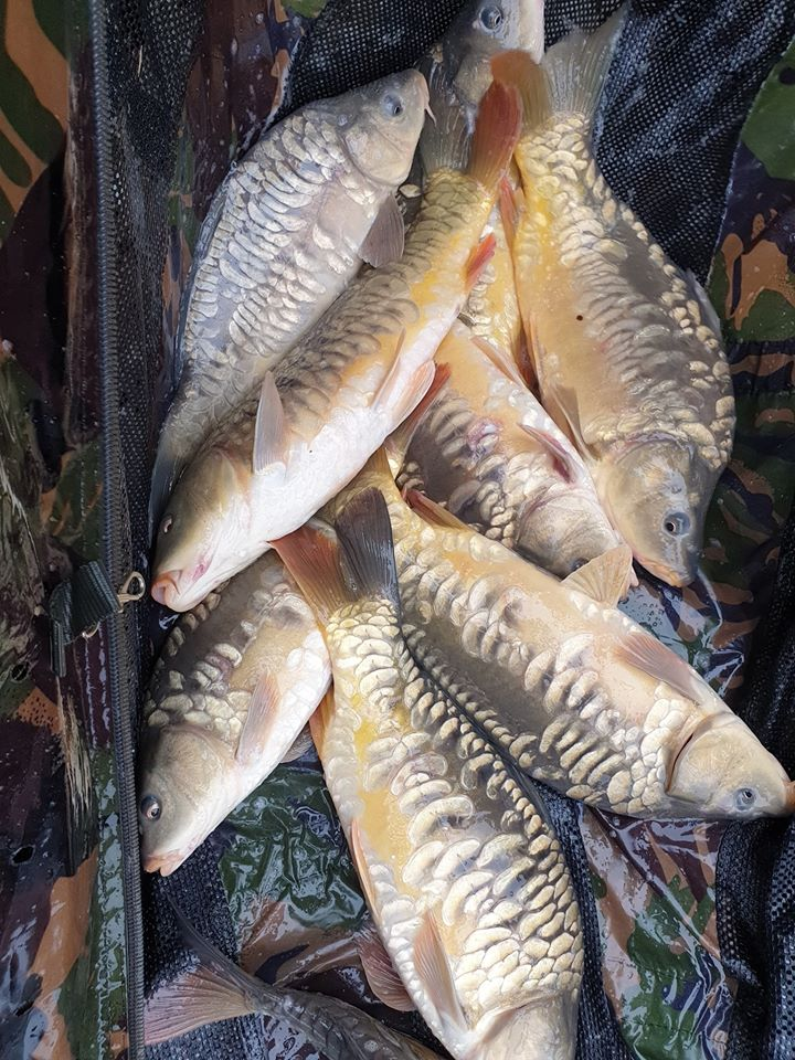 Nieuwe vis voor Ruffaud
